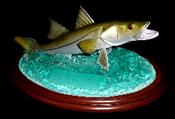 "14"" Snook Trophy"